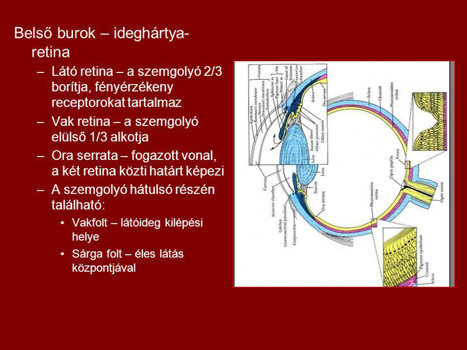 Belső burok – ideghártya-retina