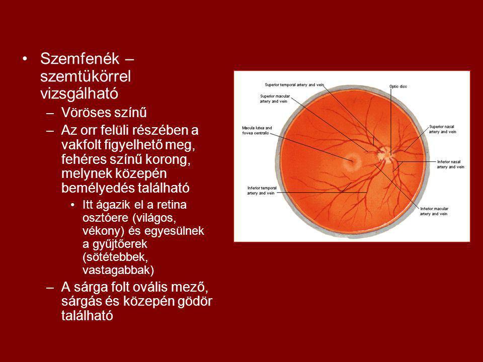 Szemfenék – szemtükörrel vizsgálható