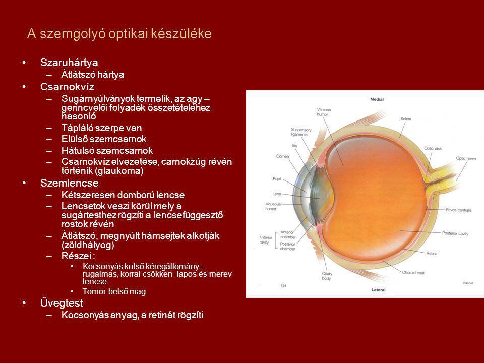 A szemgolyó optikai készüléke