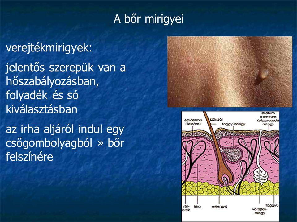 A bőr mirigyei