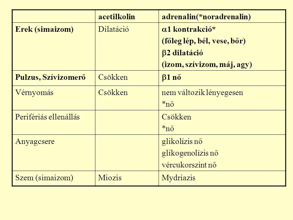 acetilkolin adrenalin(*noradrenalin) Erek (simaizom) Dilatáció. 1 kontrakció* (főleg lép, bél, vese, bőr)