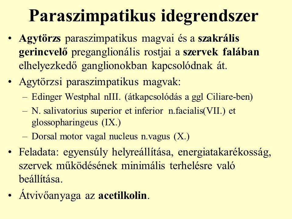 Paraszimpatikus idegrendszer