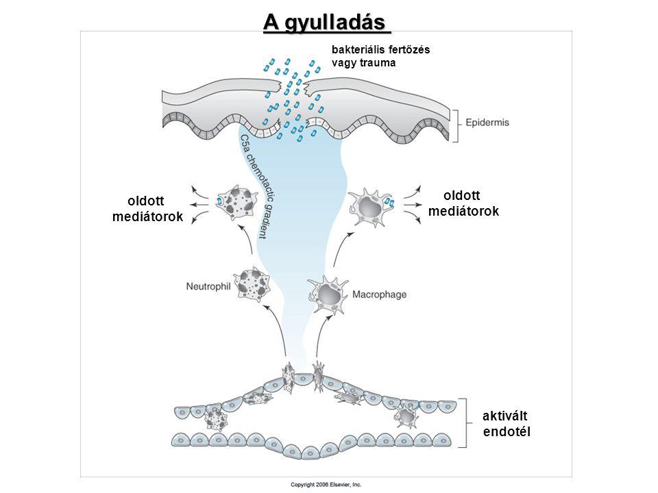 A gyulladás oldott oldott mediátorok mediátorok aktivált endotél