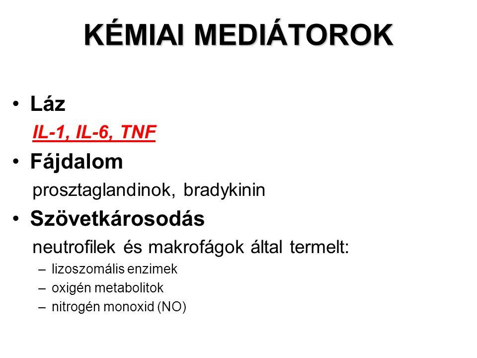 KÉMIAI MEDIÁTOROK Láz Fájdalom Szövetkárosodás IL-1, IL-6, TNF