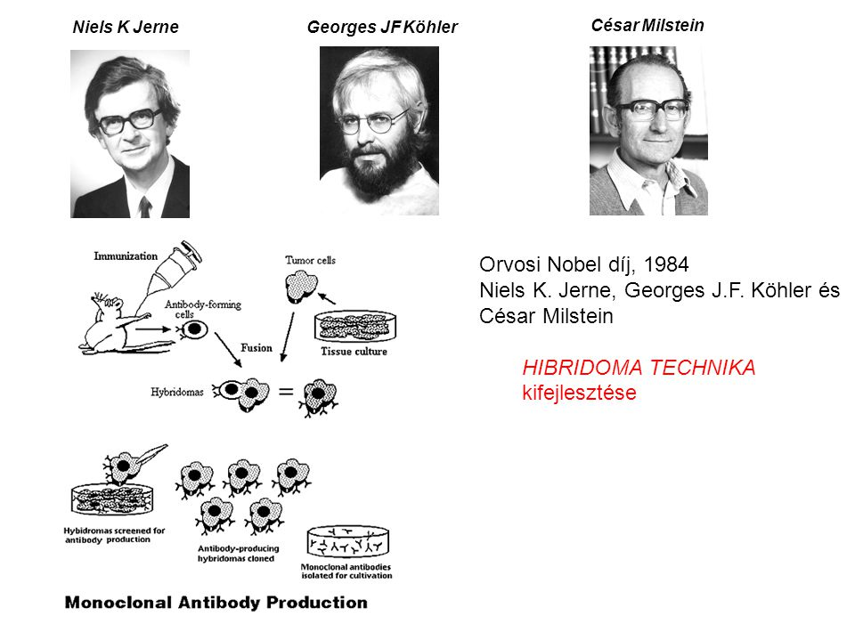 Niels K. Jerne, Georges J.F. Köhler és César Milstein