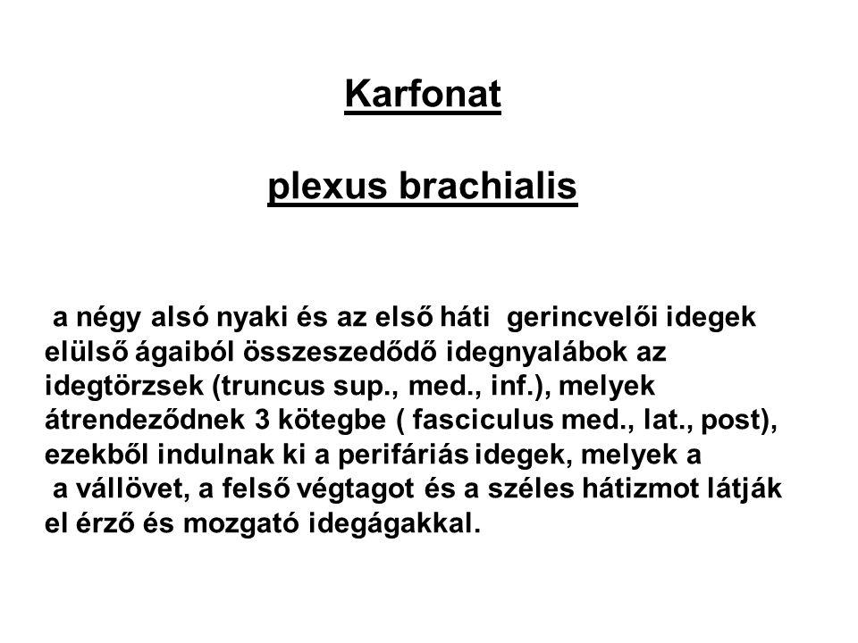 Karfonat plexus brachialis