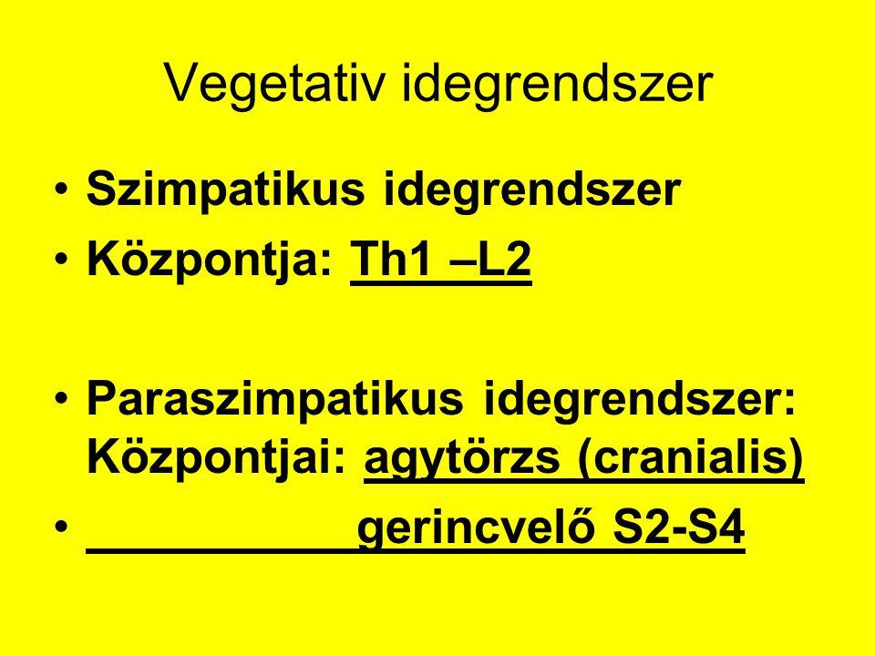 Vegetativ idegrendszer