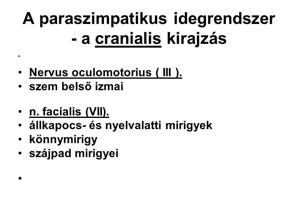 A paraszimpatikus idegrendszer - a cranialis kirajzás