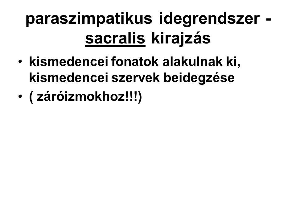paraszimpatikus idegrendszer - sacralis kirajzás