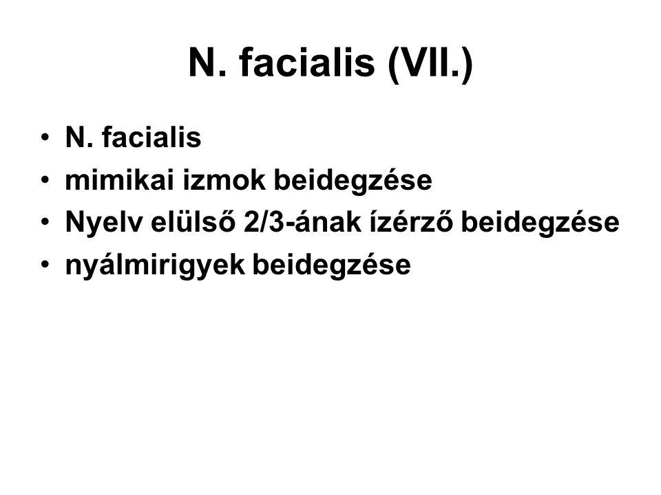 N. facialis (VII.) N. facialis mimikai izmok beidegzése