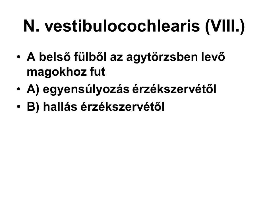 N. vestibulocochlearis (VIII.)