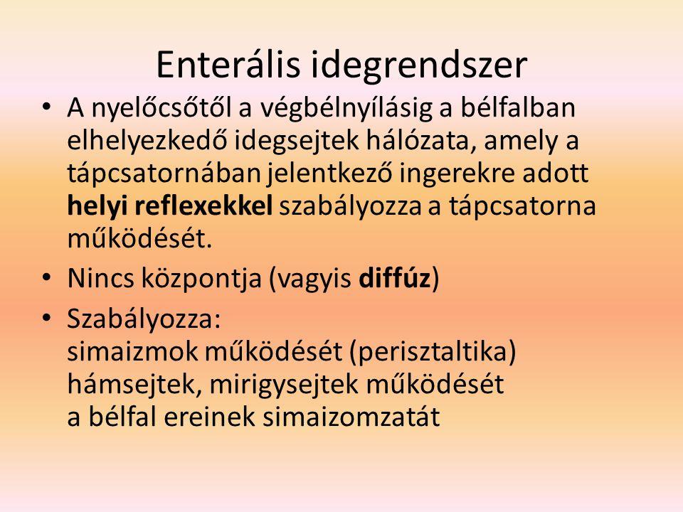 Enterális idegrendszer