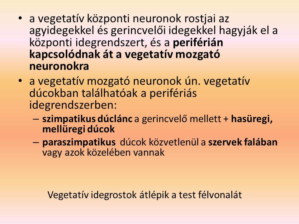 a vegetatív központi neuronok rostjai az agyidegekkel és gerincvelői idegekkel hagyják el a központi idegrendszert, és a periférián kapcsolódnak át a vegetatív mozgató neuronokra