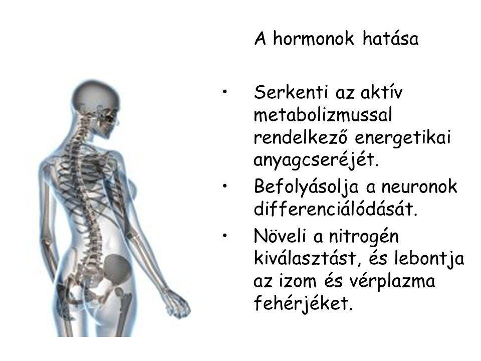 A hormonok hatása Serkenti az aktív metabolizmussal rendelkező energetikai anyagcseréjét. Befolyásolja a neuronok differenciálódását.