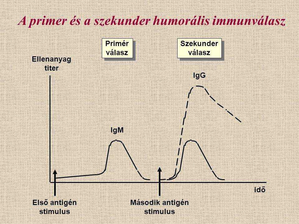 A primer és a szekunder humorális immunválasz