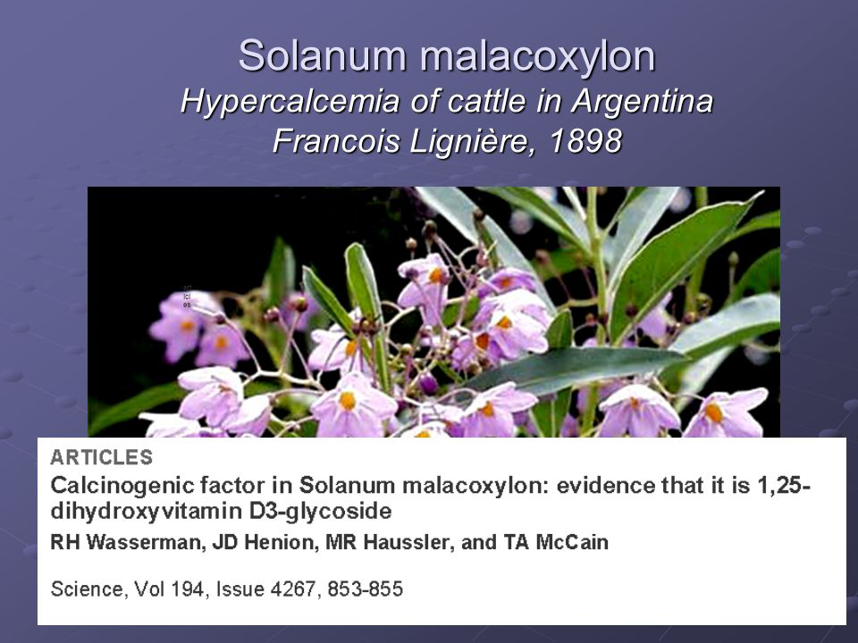 Solanum malacoxylon Hypercalcemia of cattle in Argentina Francois Lignière, 1898
