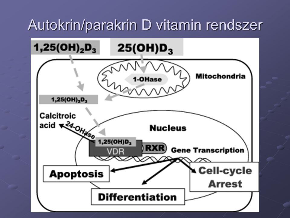Autokrin/parakrin D vitamin rendszer