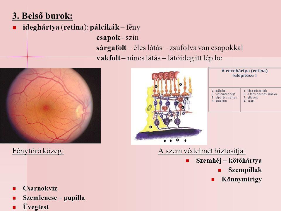 A recehártya (retina) felépítése !