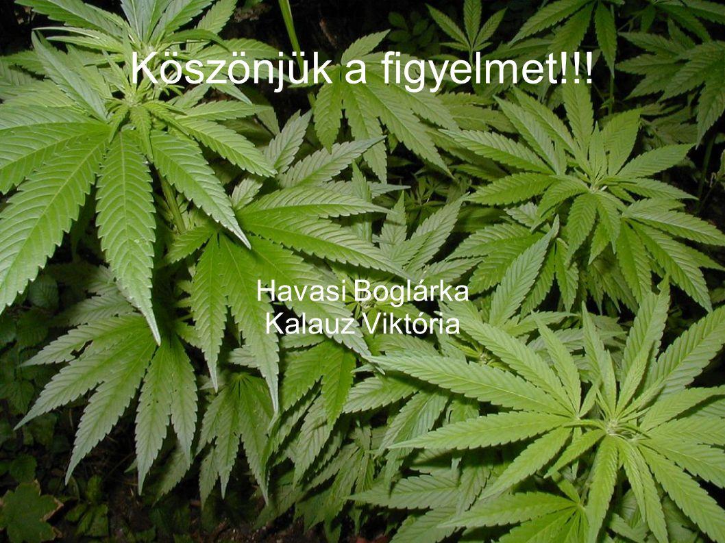 Havasi Boglárka Kalauz Viktória
