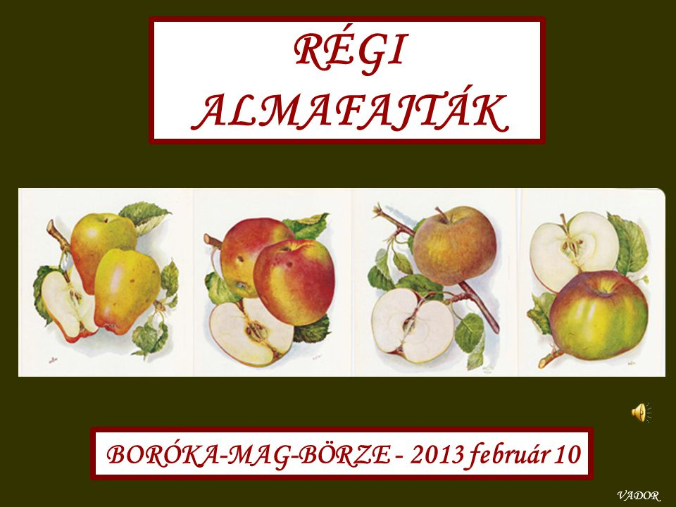 BORÓKA-MAG-BÖRZE - 2013 február 10