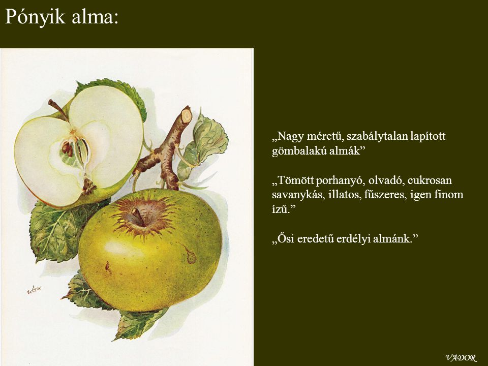 """Pónyik alma: """"Nagy méretű, szabálytalan lapított gömbalakú almák"""