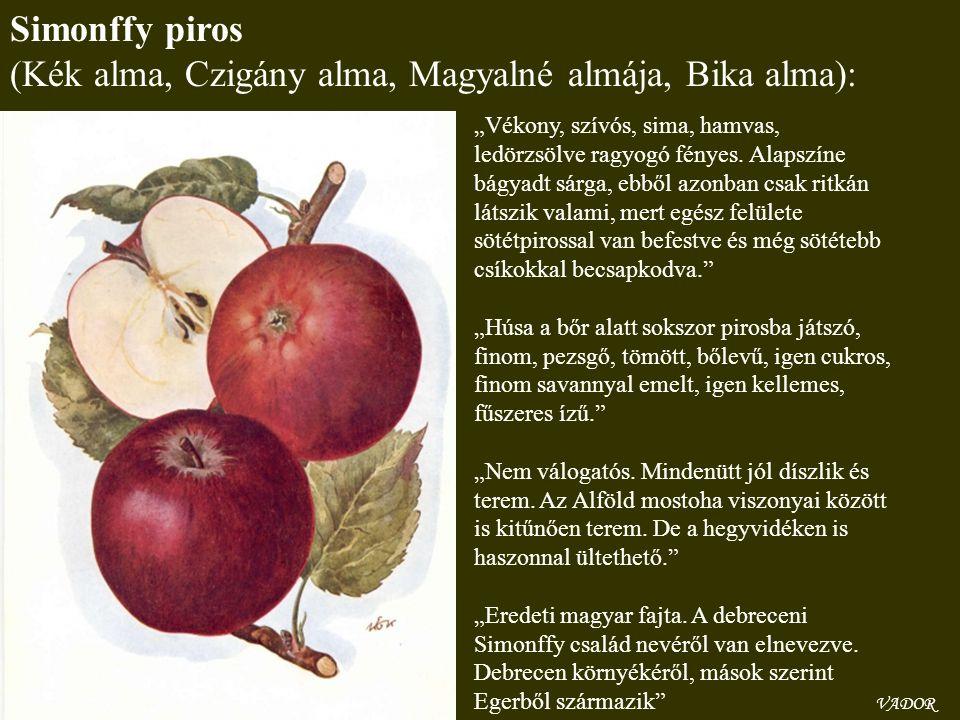 (Kék alma, Czigány alma, Magyalné almája, Bika alma):