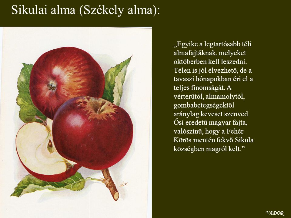 Sikulai alma (Székely alma):