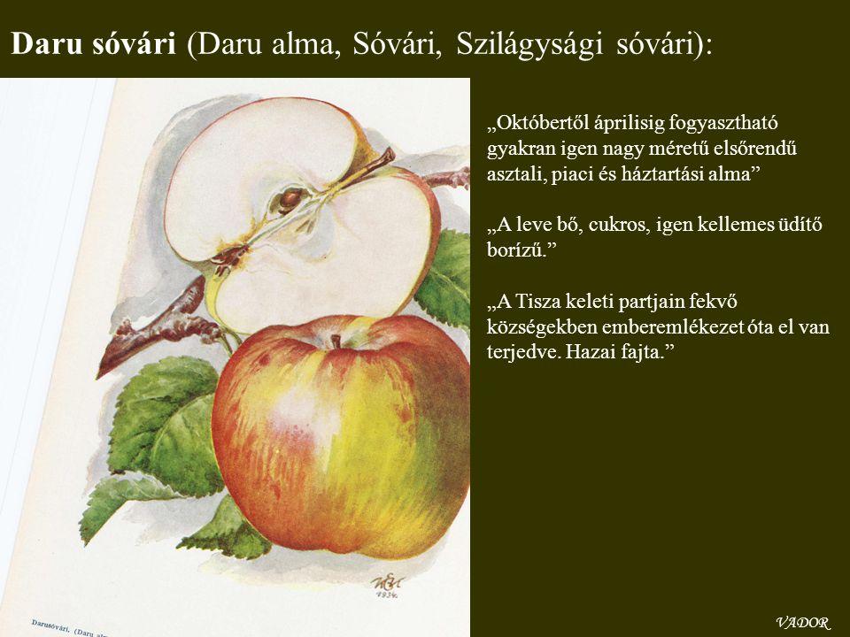 Daru sóvári (Daru alma, Sóvári, Szilágysági sóvári):