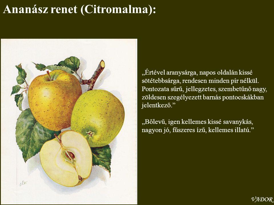 Ananász renet (Citromalma):