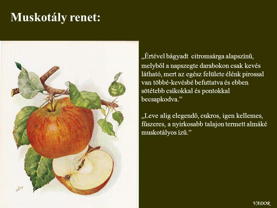 Muskotály renet: