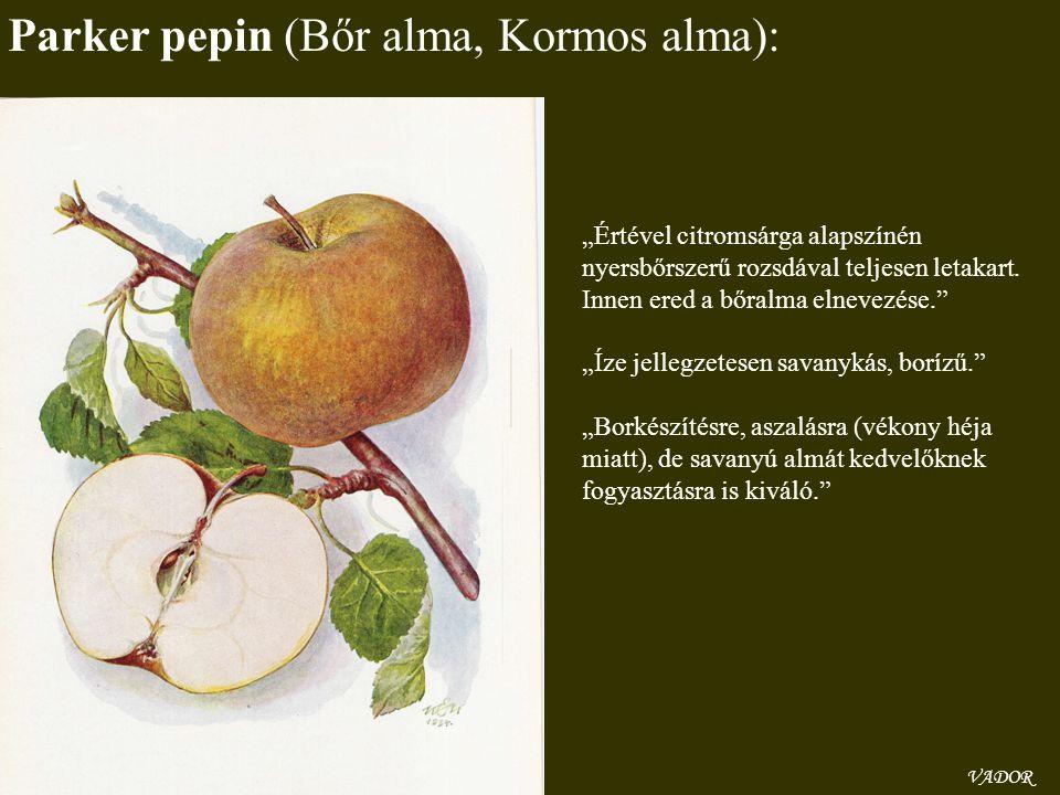 Parker pepin (Bőr alma, Kormos alma):