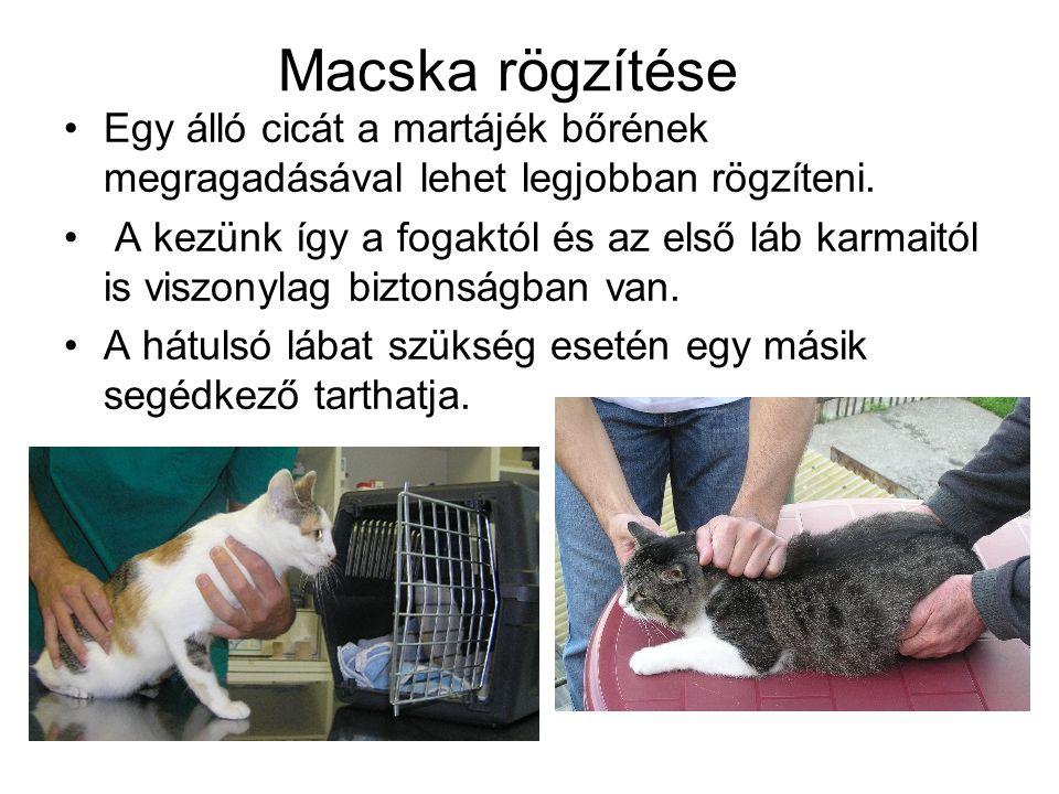 Macska rögzítése Egy álló cicát a martájék bőrének megragadásával lehet legjobban rögzíteni.