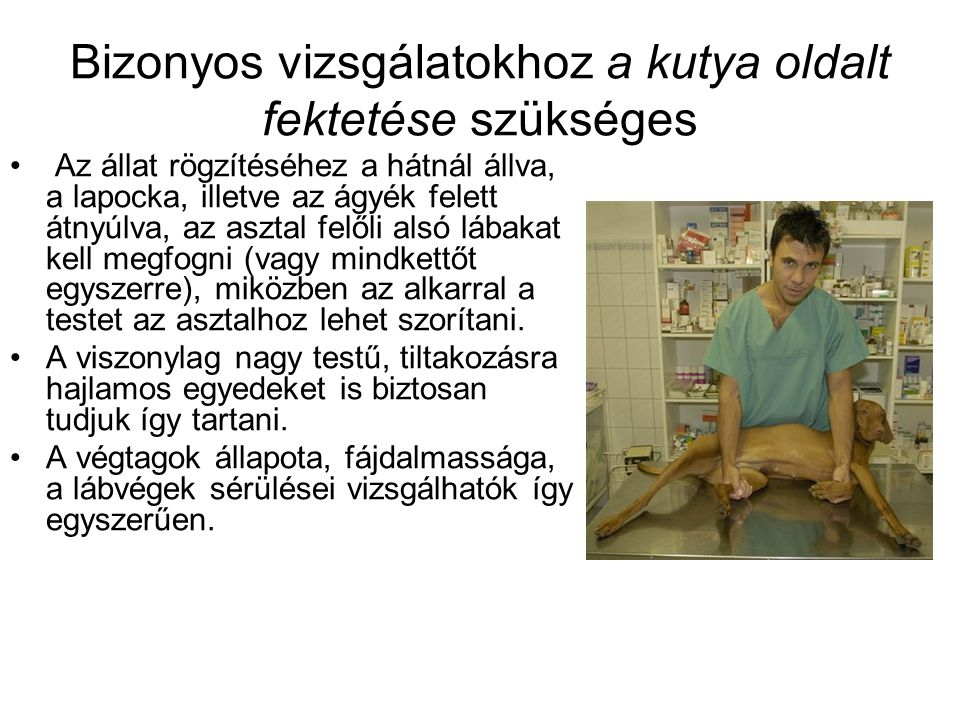 Bizonyos vizsgálatokhoz a kutya oldalt fektetése szükséges