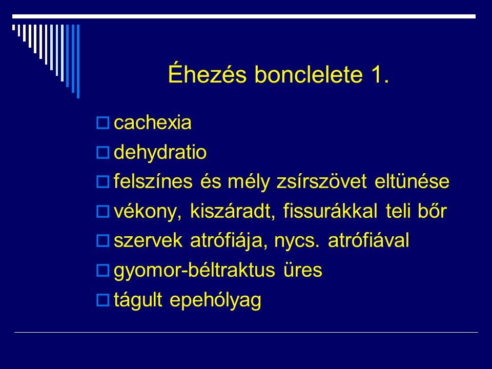 Éhezés bonclelete 1. cachexia dehydratio