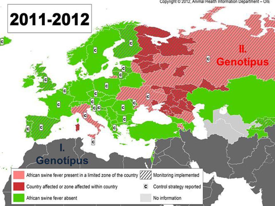 II. Genotípus I. Genotípus