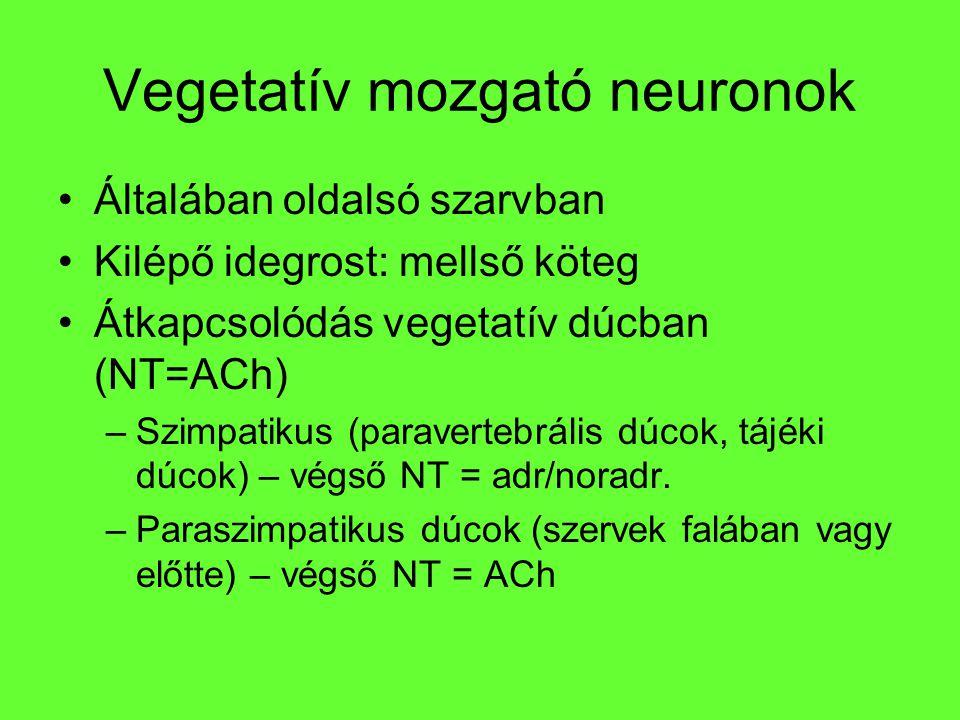 Vegetatív mozgató neuronok