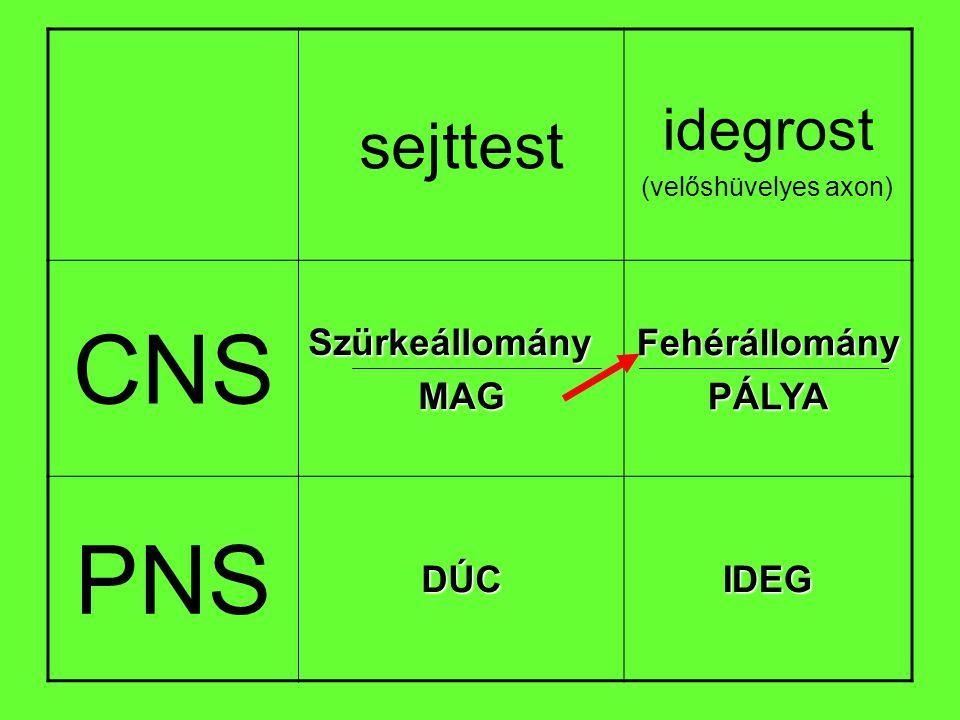 CNS PNS sejttest idegrost Szürkeállomány MAG Fehérállomány PÁLYA DÚC
