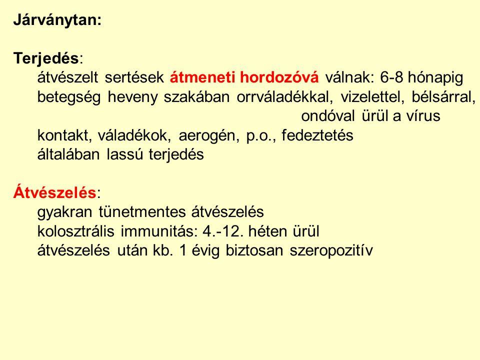 Járványtan: Terjedés: átvészelt sertések átmeneti hordozóvá válnak: 6-8 hónapig. betegség heveny szakában orrváladékkal, vizelettel, bélsárral,
