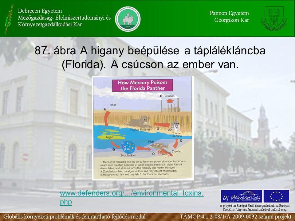 87. ábra A higany beépülése a táplálékláncba (Florida)