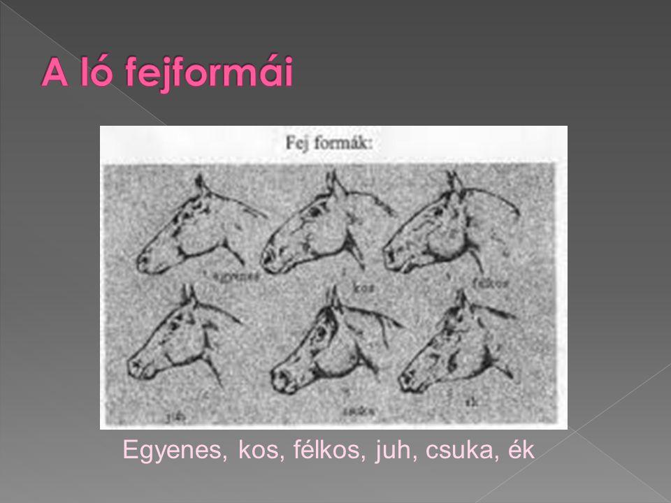 A ló fejformái Egyenes, kos, félkos, juh, csuka, ék