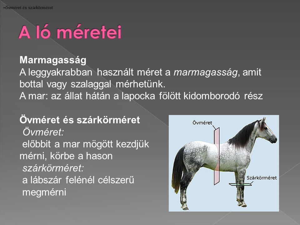A ló méretei Marmagasság
