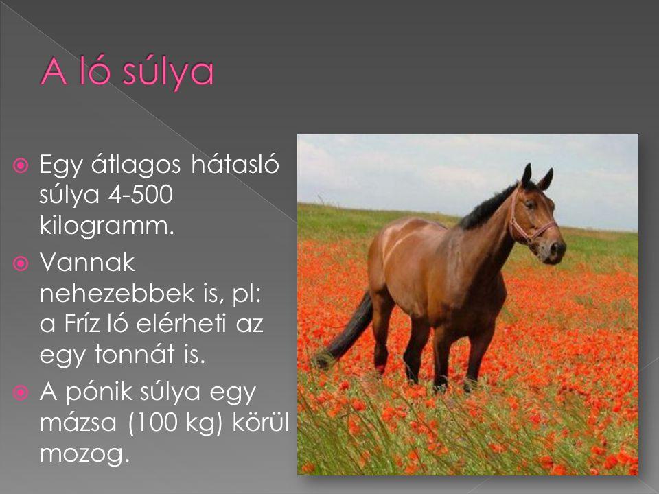 A ló súlya Egy átlagos hátasló súlya 4-500 kilogramm.