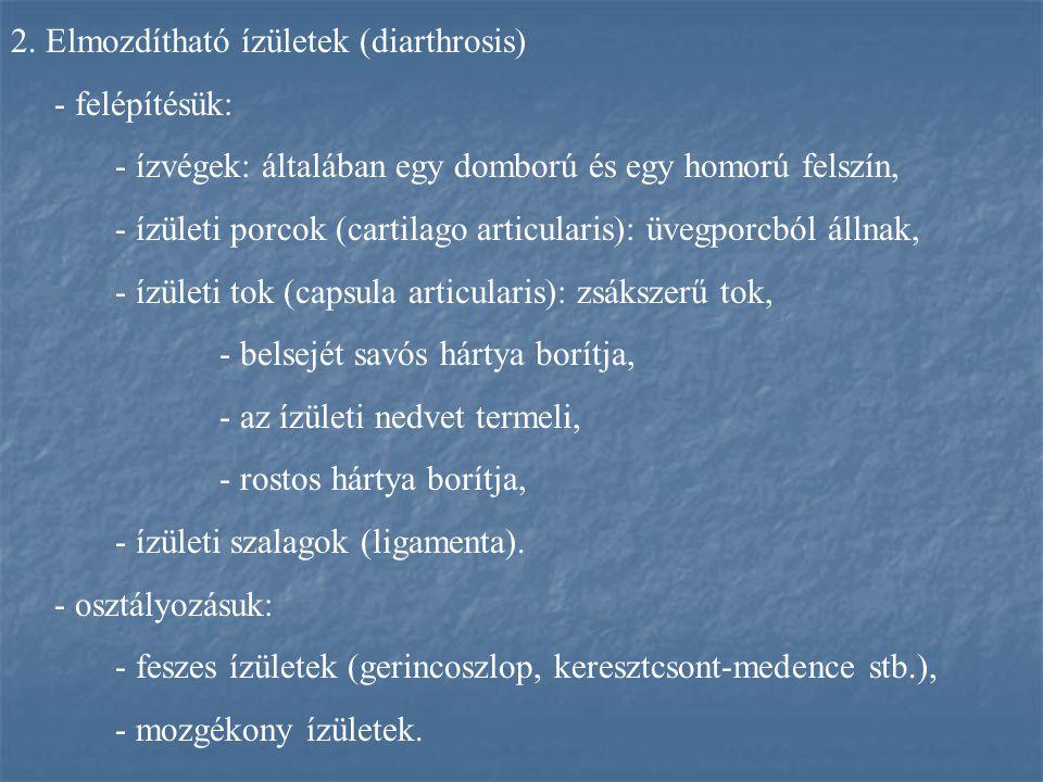 2. Elmozdítható ízületek (diarthrosis)