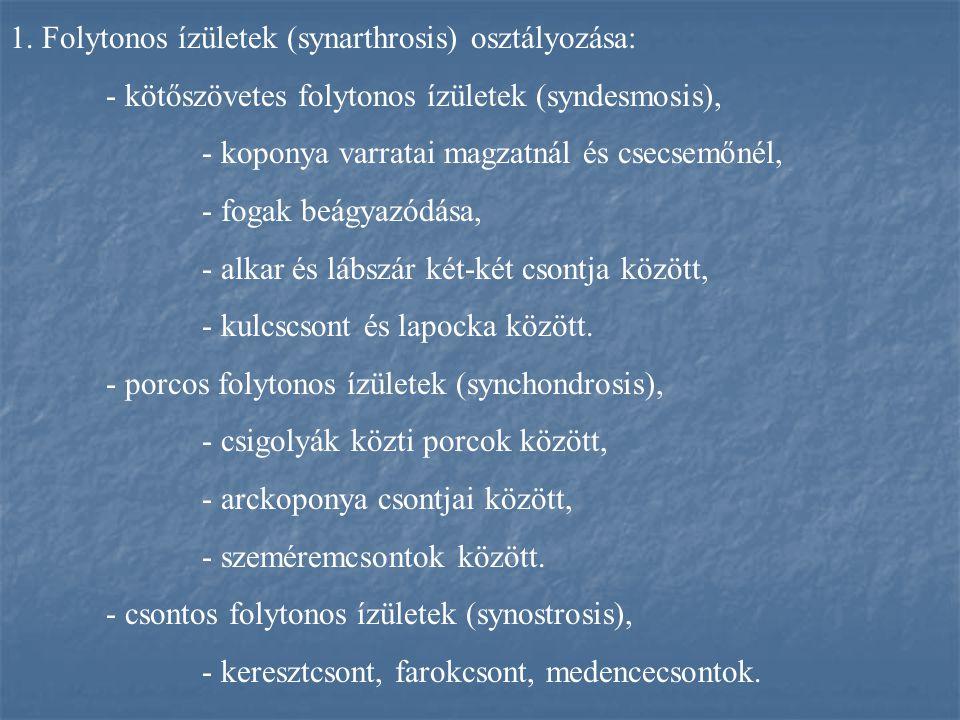 1. Folytonos ízületek (synarthrosis) osztályozása: