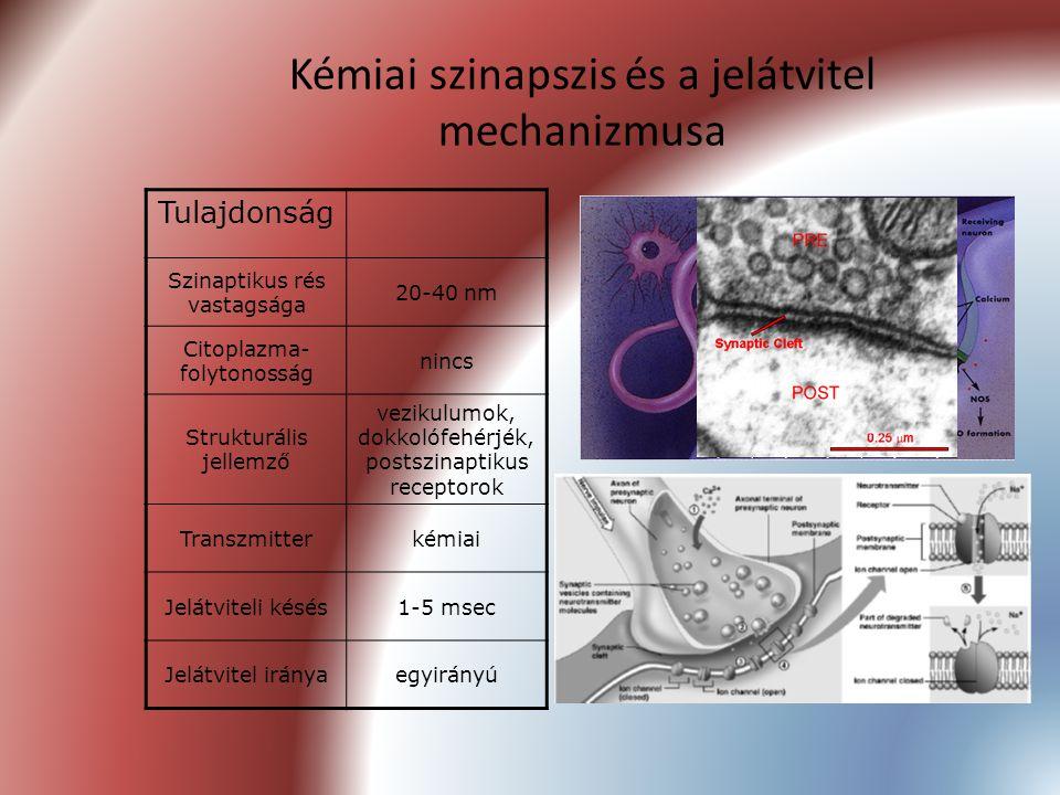 Kémiai szinapszis és a jelátvitel mechanizmusa