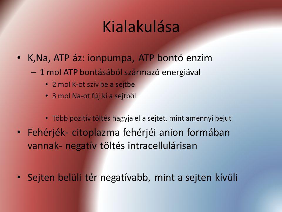 Kialakulása K,Na, ATP áz: ionpumpa, ATP bontó enzim