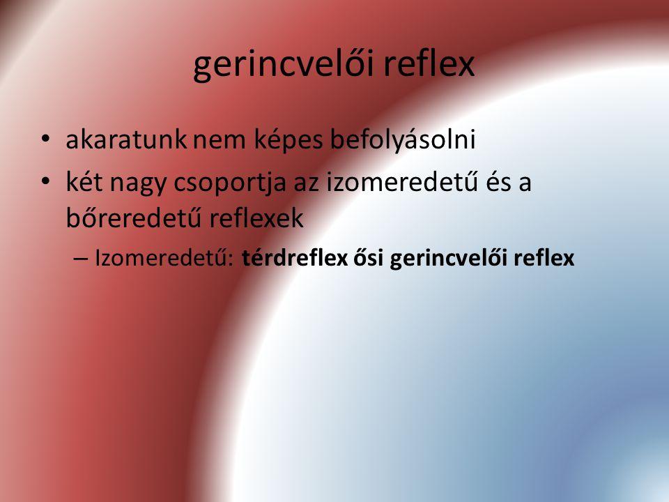 gerincvelői reflex akaratunk nem képes befolyásolni