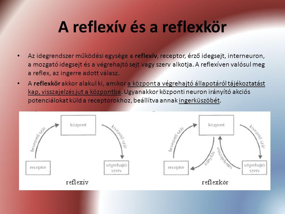 A reflexív és a reflexkör