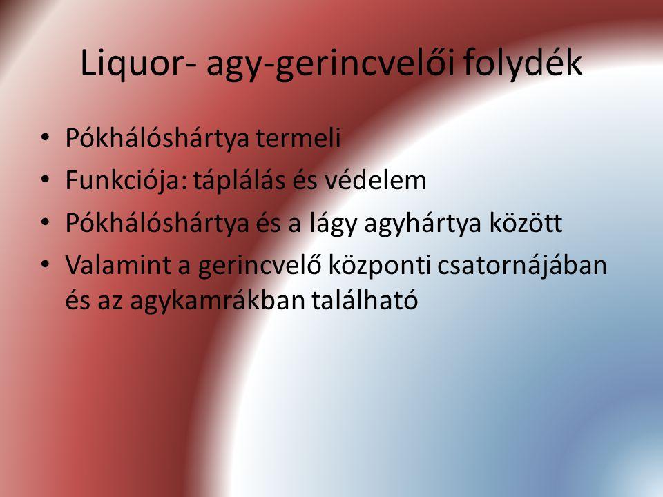 Liquor- agy-gerincvelői folydék
