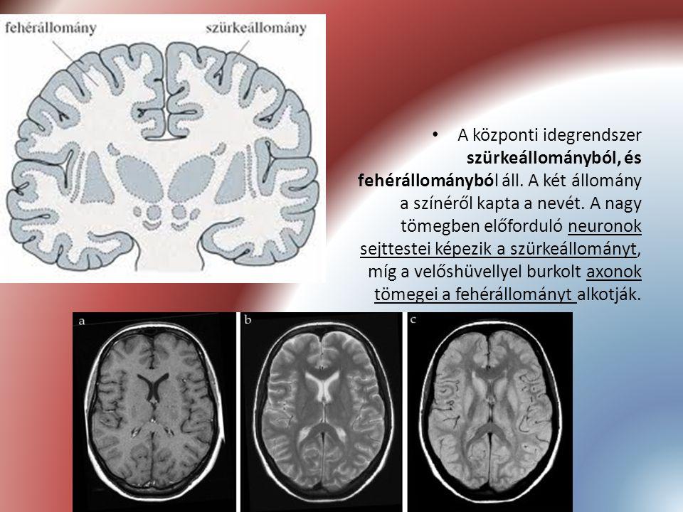 A központi idegrendszer szürkeállományból, és fehérállományból áll